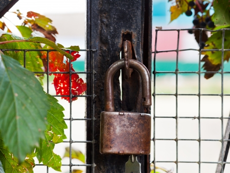 padlock with key on gate close up outdoors photo
