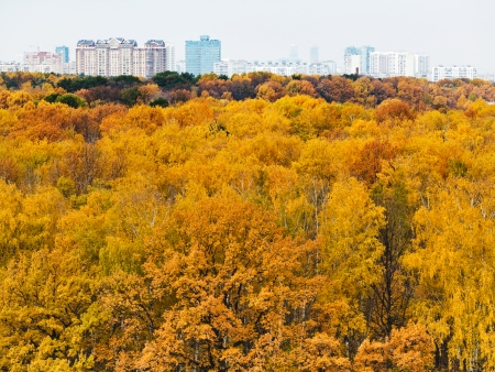 yellow autumn forest and urban building on horizon photo