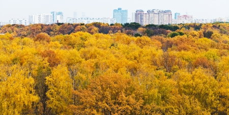 panoramic cityscape view with autumn urban park photo