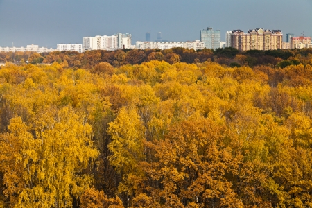 skyline with autumn urban park photo