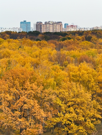 yellow autumn forest and urban building photo