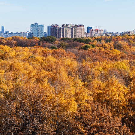 urban buildings on autumn forest edge with yellow trees in sunny day photo
