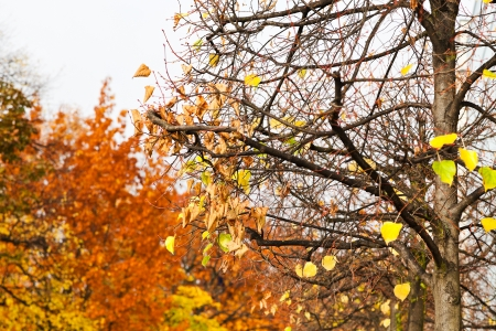 last yellow leaves on tree in sunny autumn day photo