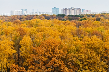 top view of yellow autumn forest and urban building on horizon photo