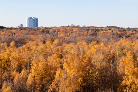autumn view with yellow forest trees and urban house in sunny day photo