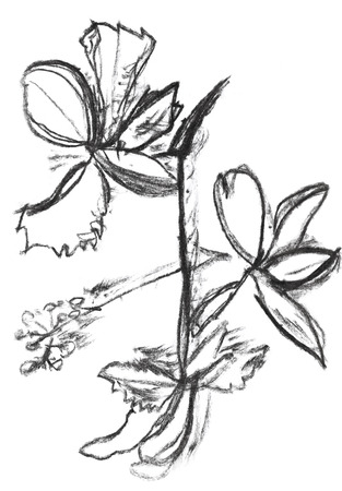 dessin enfants: dessin d'enfants - blueflag fleur d'iris