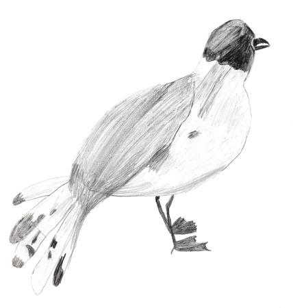dessin enfants: enfants dessin-Sterna oiseau sur fond blanc