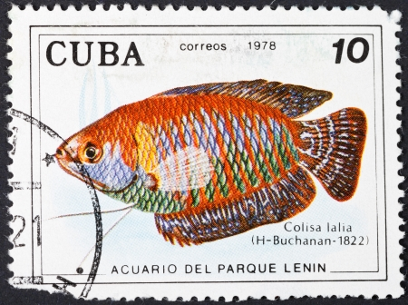 CUBA - CIRCA 1978: A postage stamp printed in the Cuba shows Colisa Lalia (Dwarf gourami ) - south asian labyrinth fish, circa 1978