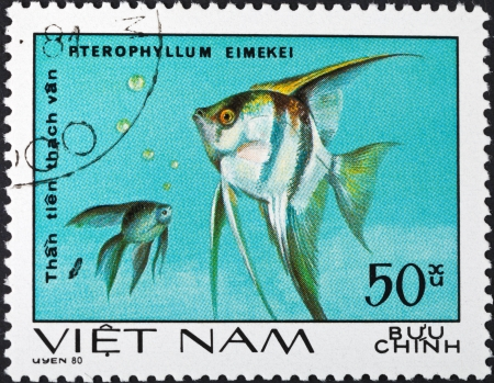 SOCIALIST REPUBLIC OF VIETNAM - CIRCA 1980: A postage stamp printed in the Vietnam shows pterophyllum eimekei - tropical angelfish, circa 1980
