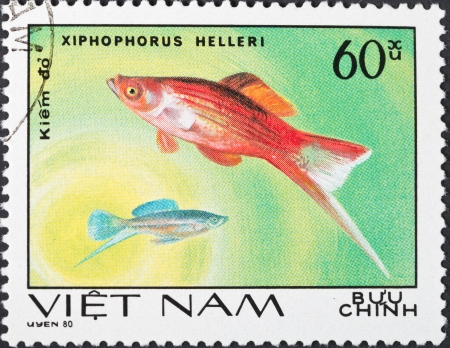 SOCIALIST REPUBLIC OF VIETNAM - CIRCA 1980: A postage stamp printed in the Vietnam shows Xiphophorus helleri - green swordtail fish, circa 1980
