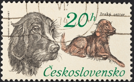 the irish image collection: CZECHOSLOVAKIA - CIRCA 1973: A postage stamp printed in the Czechoslovakia shows hunting dog breed Irish Setter, circa 1973 Editorial