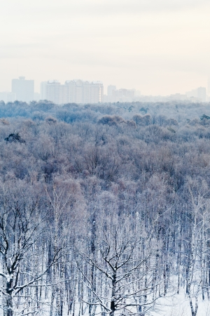 frozen dawn over city park in winter, Moscow photo
