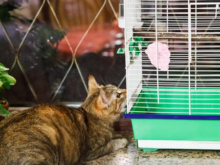 catling: cat watching bird in cage on windowsill