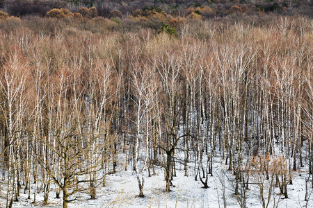 thawing: above view of spring thawing in birch tree forest