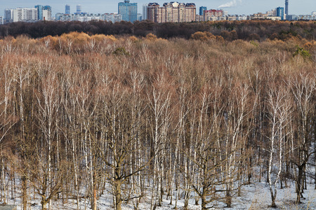 thawing: cityscape with spring thawing in urban park