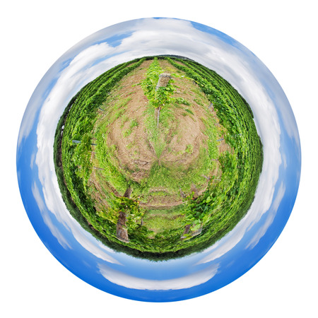 little planet - spherical view of green vineyard and olive trees on hill slope in Etna region, Sicily isolated on white background photo