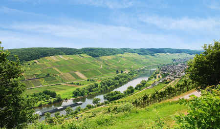 winegrowing: riverside of Moselle river with vineyards on green hills, Germany Stock Photo