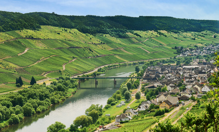 mosel: view of Town Zell and Moselle river in summer day