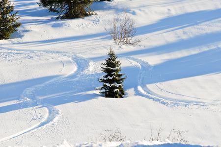 soleil: skiing tracks around fir tree on snow slope in Portes du Soleil region, Morzine - Avoriaz, France
