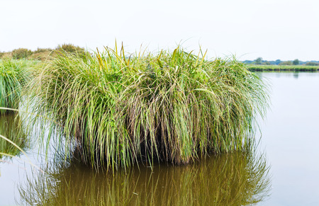 parc naturel: overgrown green island in Briere Marsh in Briere Regional Natural Park, France Stock Photo