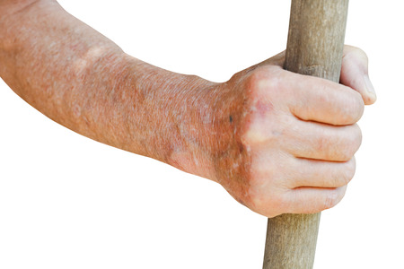 agrarian: male hand holds old wooden stalk isolated on white