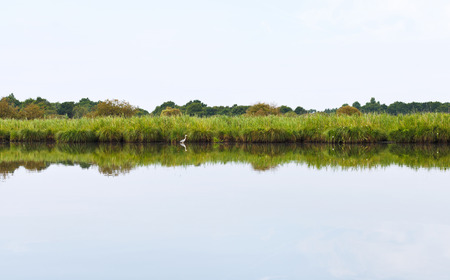 parc naturel: grey heron and green coast of Briere Marsh in Briere Regional Natural Park, France