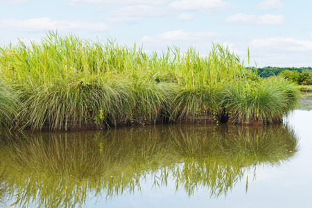 parc naturel: green island in Briere Marsh in Briere Regional Natural Park, France