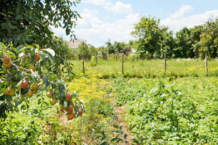 kuban: view of rural garden on backyard in summer day Stock Photo