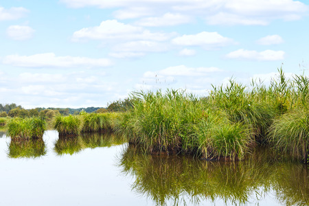 parc naturel: many green islands in Briere Marsh in Briere Regional Natural Park, France
