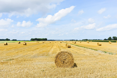 haycock: yellow haystack rolls on harvested field in Normandy, France Stock Photo