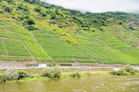 an agricultural district: vineyard on green hills along Moselle river, Germany