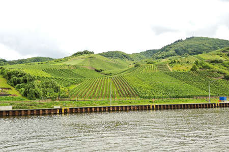 mosel: waterfront of Moselle river and vineyards on green hills, Germany