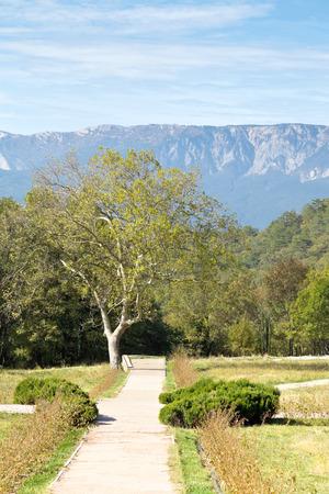garden of massandra palace in Crimea in autumn