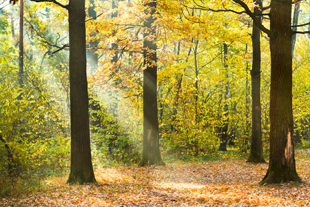 sun lit: sun lit lawn in autumn forest in sunny day