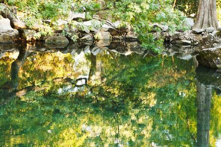 alupka: trees reflected in water of pond in Alupka garden, Crimea