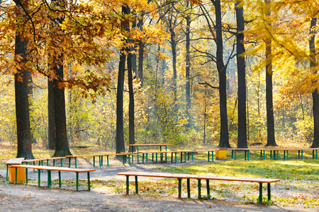 garden benches in yellow forest in sunny autumn day photo