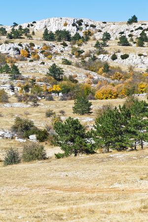 trees on mountain plateau Ai-Petri in Crimea in sunny autumn day photo