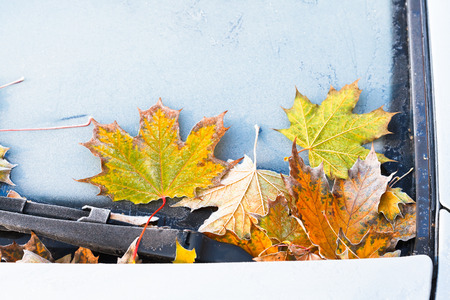 frost on fallen yellow maple leaves on car hood in autumn photo