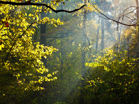 leafage: sun rays through leafage in autumn forest Stock Photo