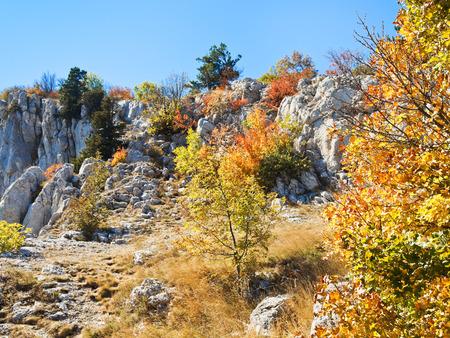 yellow trees on slope Ai-Petri mountain in autumn, Crimea photo