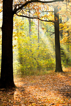 sun lit: sun lit glade in autumn forest in sunny day