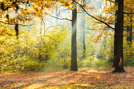 sunlight lit glade in autumn forest in sunny day photo