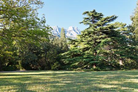 vorontsov: lawn in Alupka (Vorontsov) garden in autumn day, Crimea
