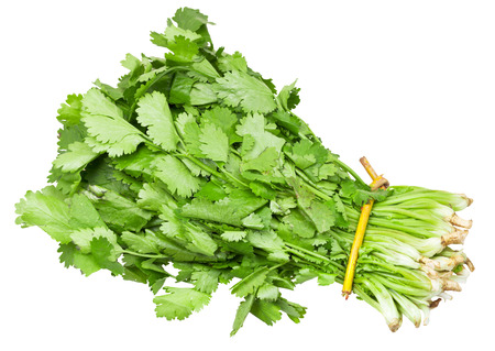 bunch of fresh coriander leaves isolated on white background
