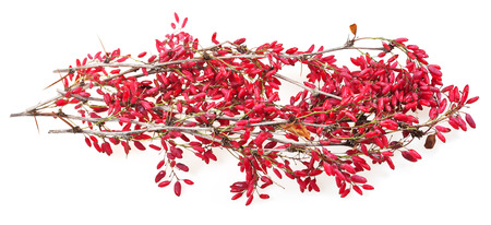 barbery: red berberis shoot with ripe fruits on white board