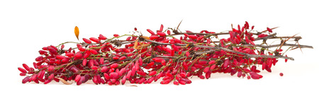 barbery: red berberis sprig with ripe fruits on white board Stock Photo