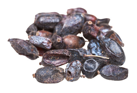 barbery: handful of dried black berberis (Berberis sphaerocarpa) fruits close up isolated on white background