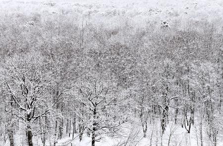 snowbound: above view of snowbound forest in winter snowfall