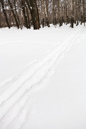 ski runs: ski runs on the edge of birch forest in winter Stock Photo