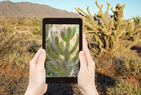 mohave: travel concept - tourist shooting photo of cactus in Mohave Desert on mobile gadget, USA